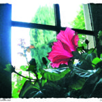 aquarelle fenêtre abbaye1